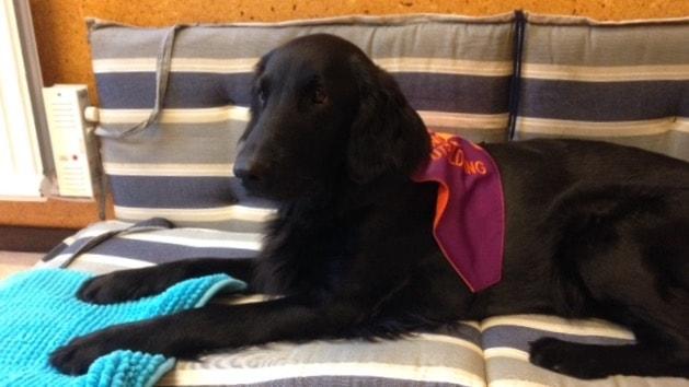 Hunden Kajsa har svart päls.