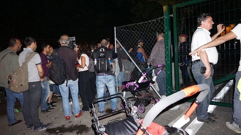 Flyktingar vid ett stängsel mellan Ungern och Serbien