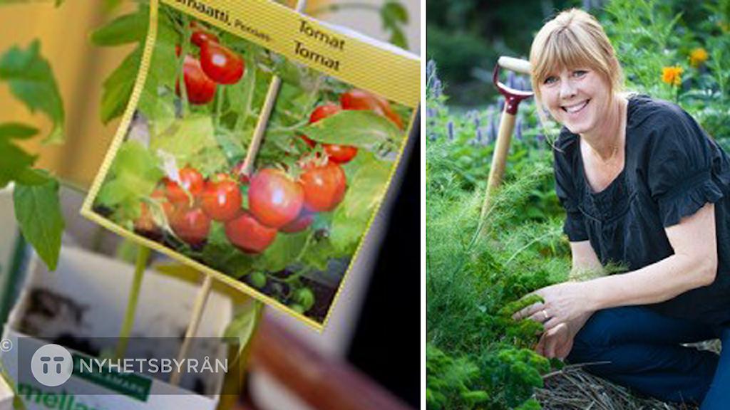Tomatodling och författaren Bella Linde i ett grönsaksland.