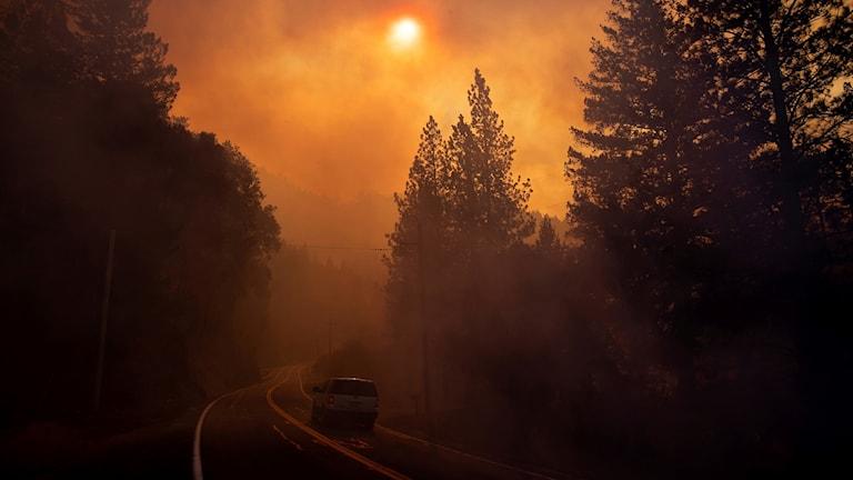 Fotot visar träd, en bil på en väg och en brand