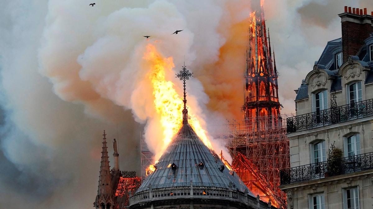 Notre Dame i lågor och brandrök.