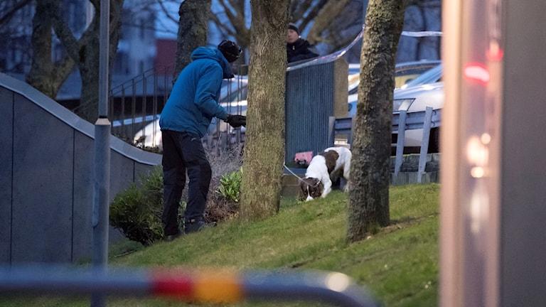 Fotot visar en polis med hund som söker igenom ett område med gräs efter spår av männen som ska ha våldtagit en kvinna.
