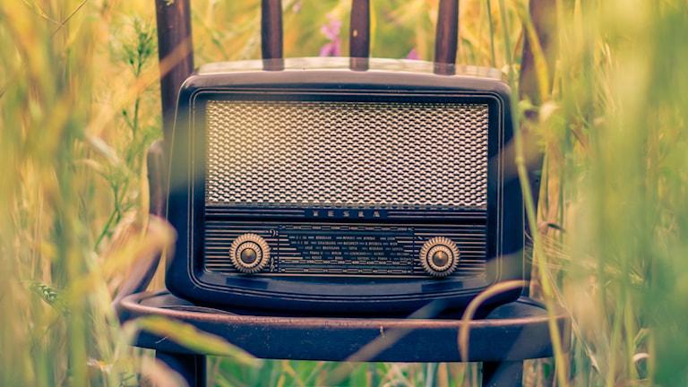 Bild på gammal radio-apparat på en stol på en äng