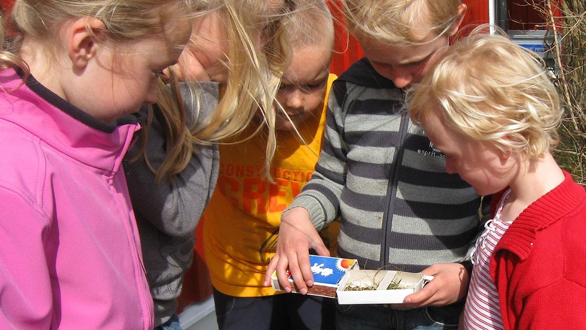 Naturbyrån 2a: Ella, Alva, Felix, Jakob o Elsa.
