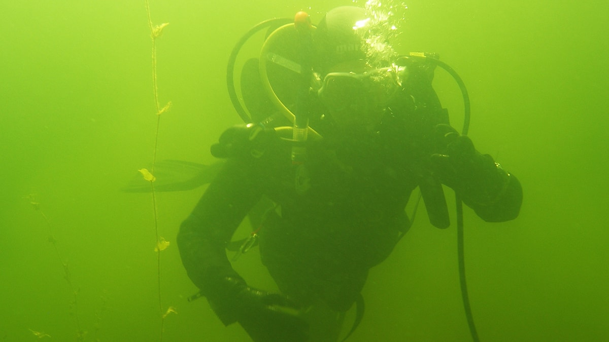 Dykare under vatten.