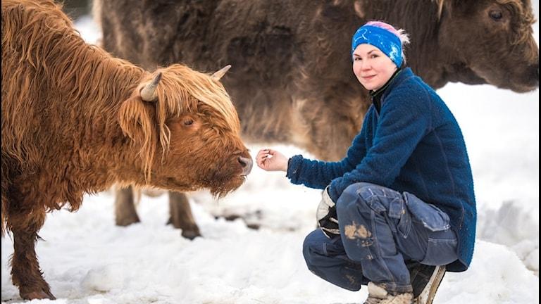 Kvinna med highland-cattle