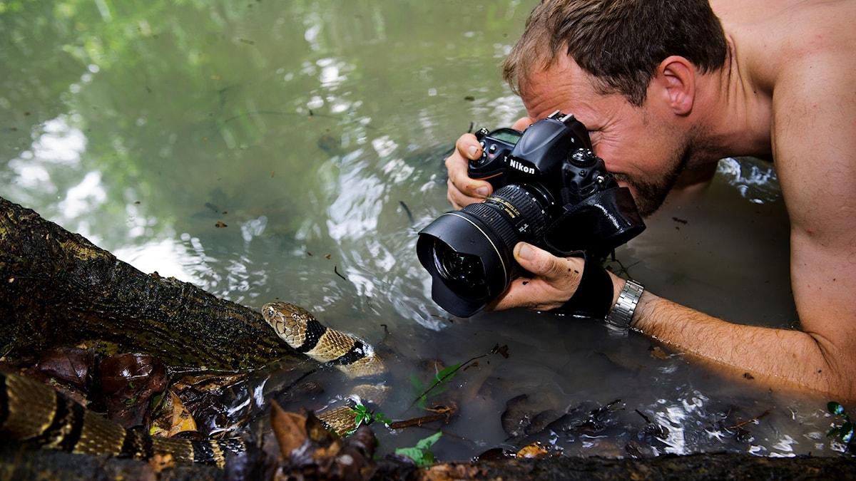 Man fotograferar orm i vatten