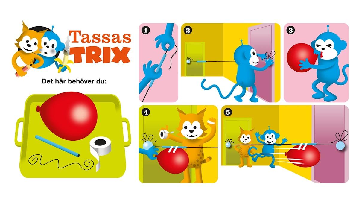Tassas Trix 6