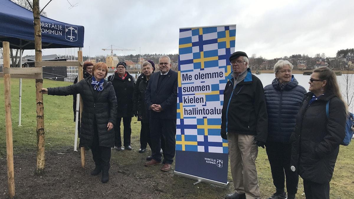 """Norrtäljessä aktiivit pitävät pystyssä uutta savolaista """"Suomi-koivua."""