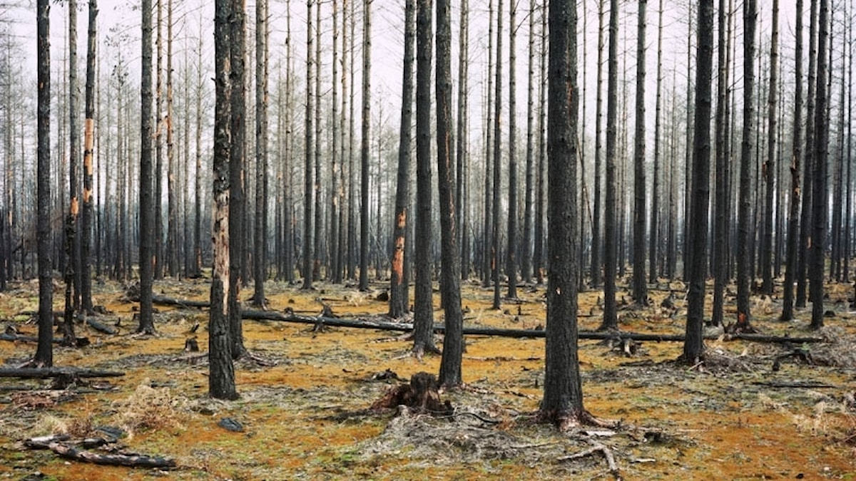 """""""Turnings of fire"""" - Fotografen Heléne Schmitz ställer ut bilder på bland annat träd på Fotografiska i Stockholm."""