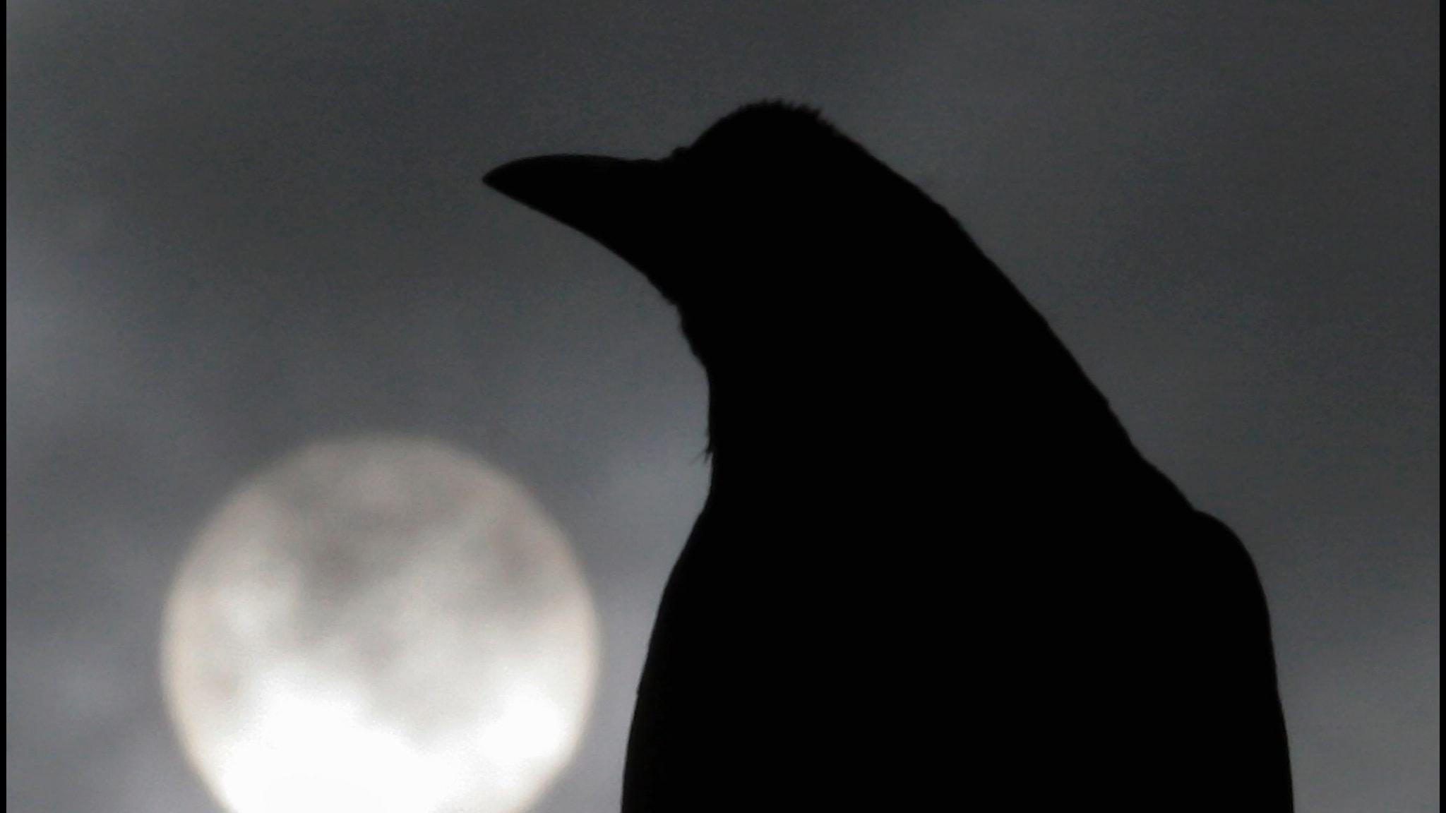 Poesins metaforer 3: Fågeln