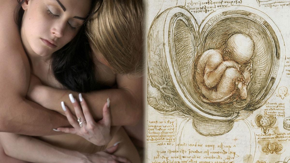 leonardo da Vinci målade sin studie av fostret i livmodern cirka 1510-1512. Då skulle det ännu dröja över 300 år tills gåtan om barnens tillblivelse var löst.