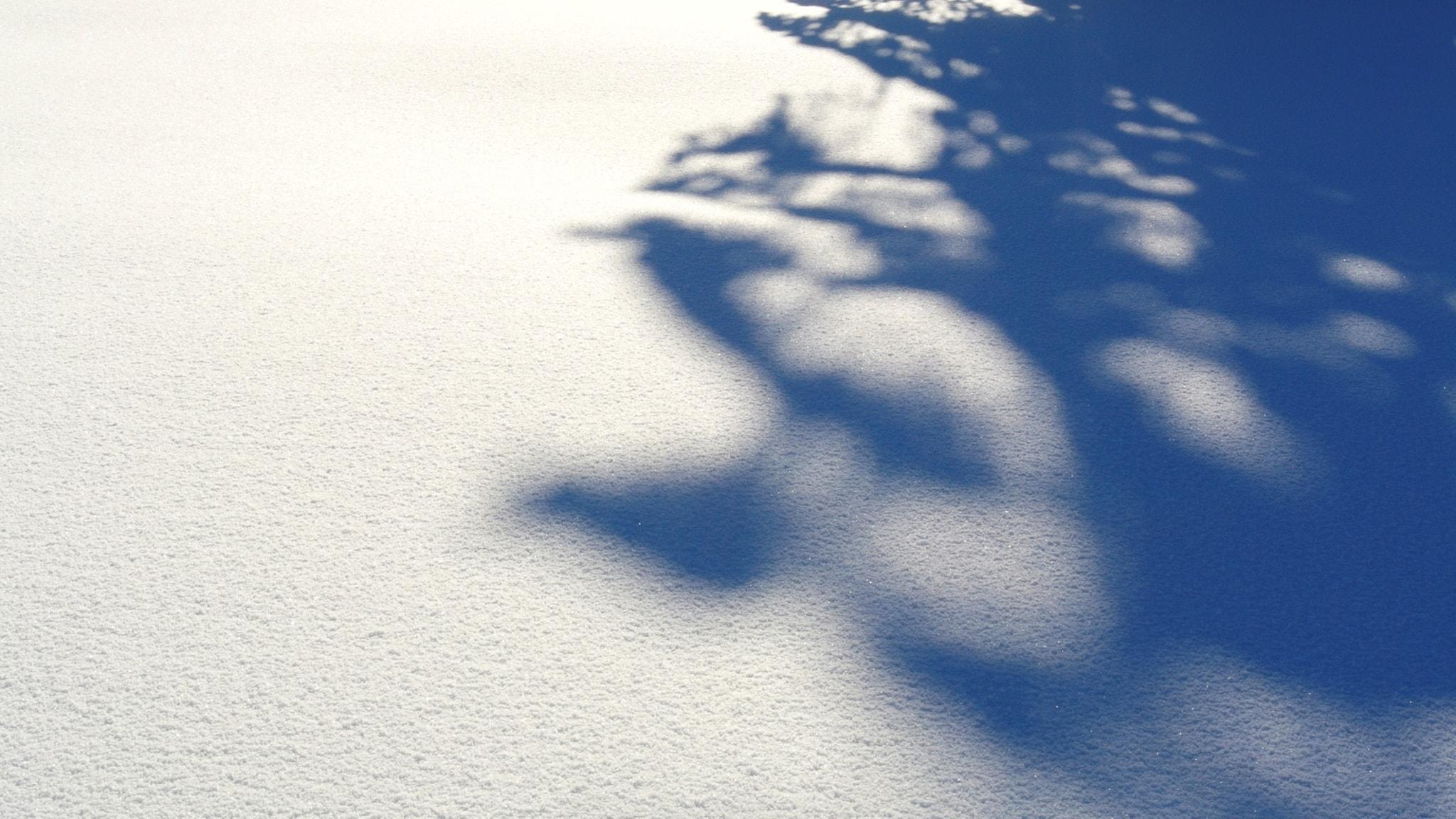 Eva-Lotta Hultén minns snön som föll för nästan 20 år sen. Men var hon verkligen där?