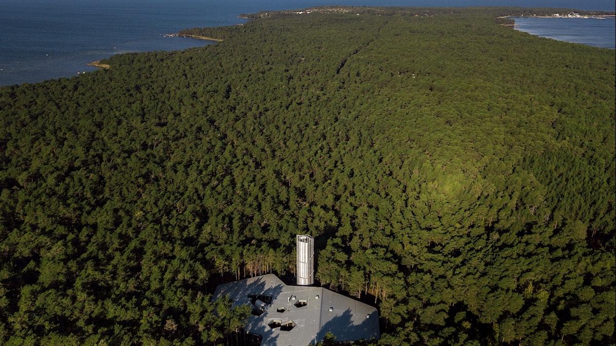 Arvo Pärt Center ligger mitt ute i skogen på den estinska kusten.