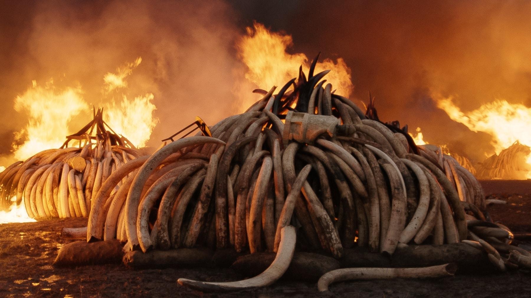 Vi reder ut Antropocen, människans epok – och kastar oss in i Sivan Divans värld