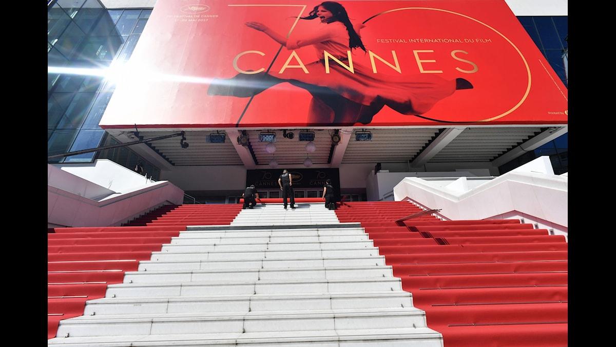 Röda mattan rullas ut inför invigningen av den 70:e filmfestivalen i Cannes.