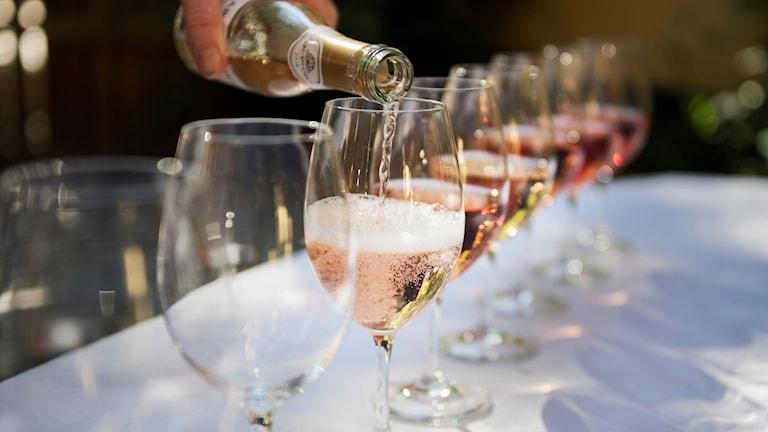Kuvassa kaadetaan roseeviiniä rivissä seisoviin laseihin.