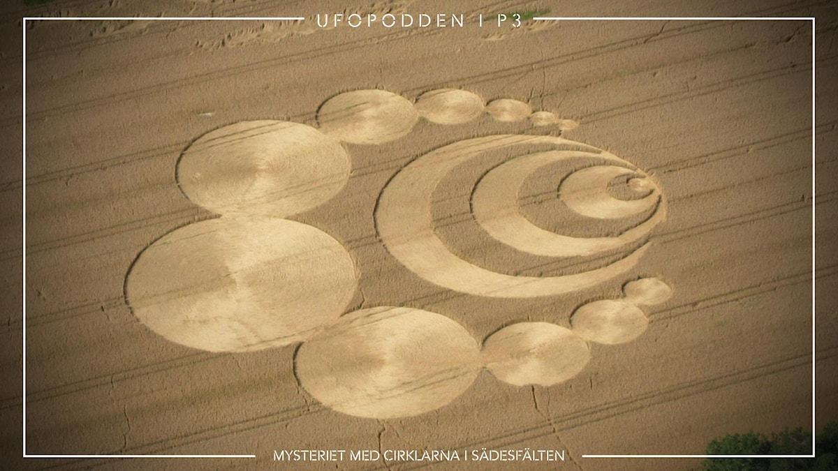 Mysteriet med cirklarna i sädesfälten