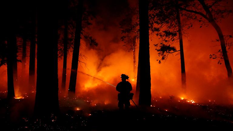 California wildfires nov 2018
