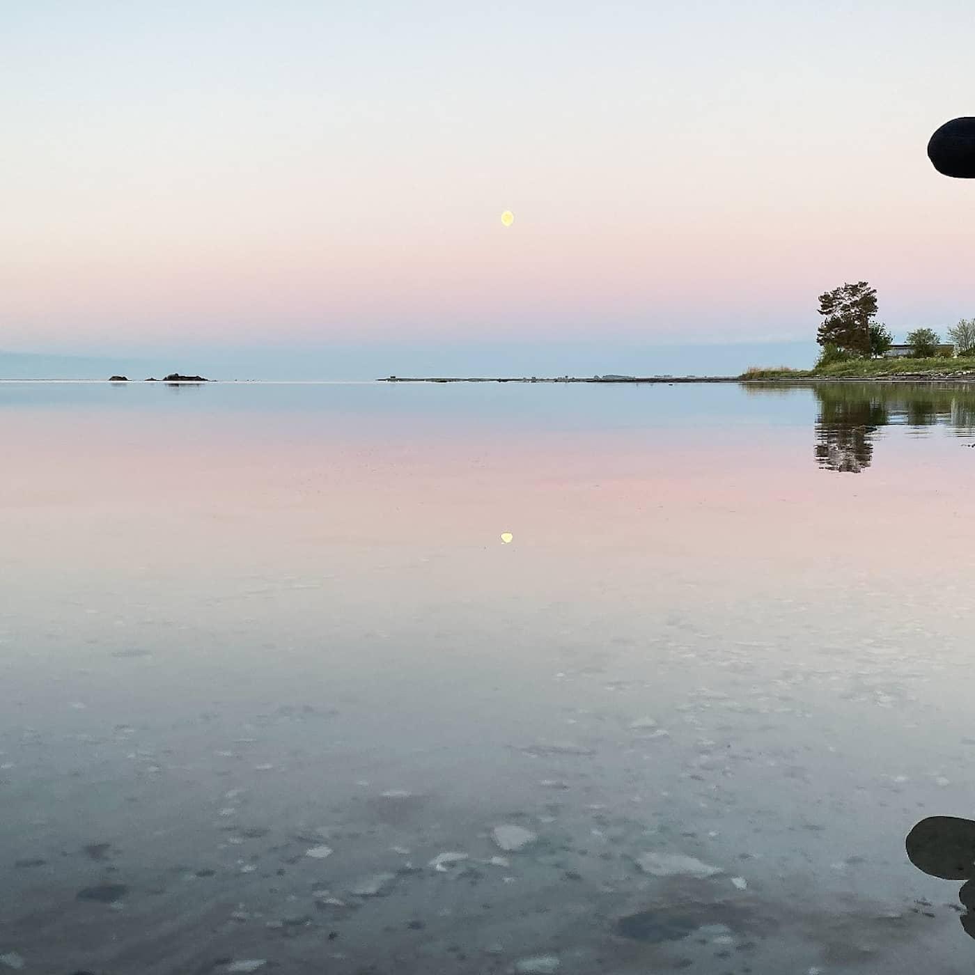 Sex timmar fågelsång från en havsstrand på Öland