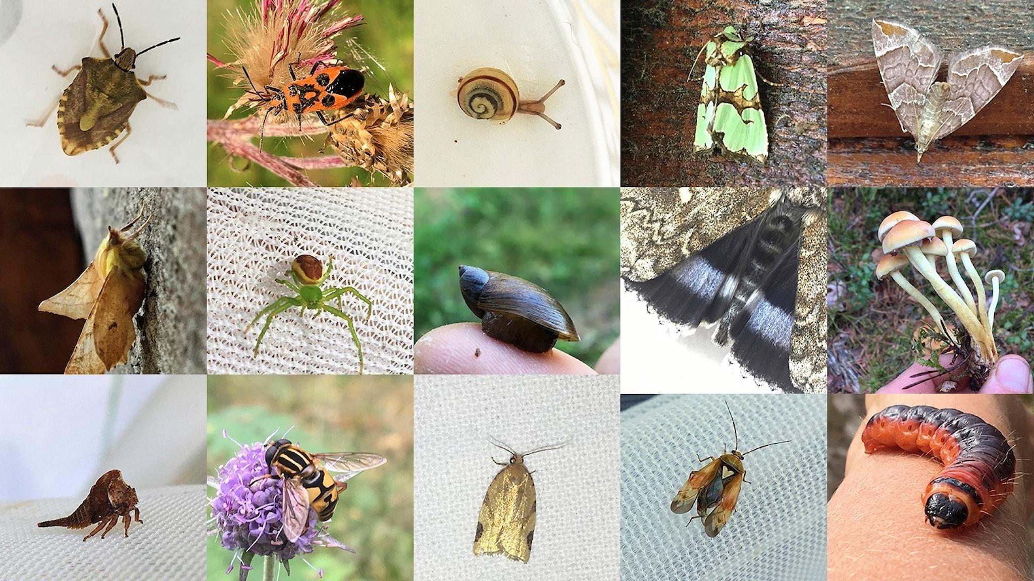 Ett collage med en mångfald av närbilder på olika djur, växter och svampar.