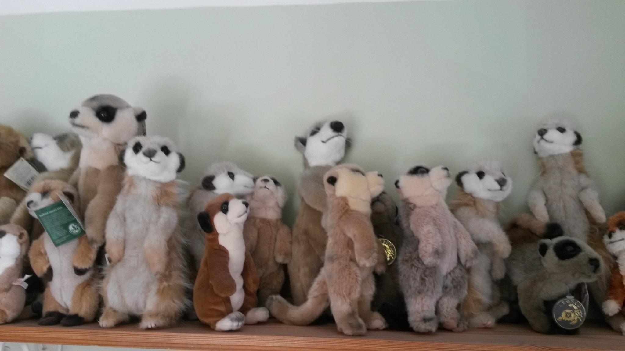 En del av Christinas surikatsamling