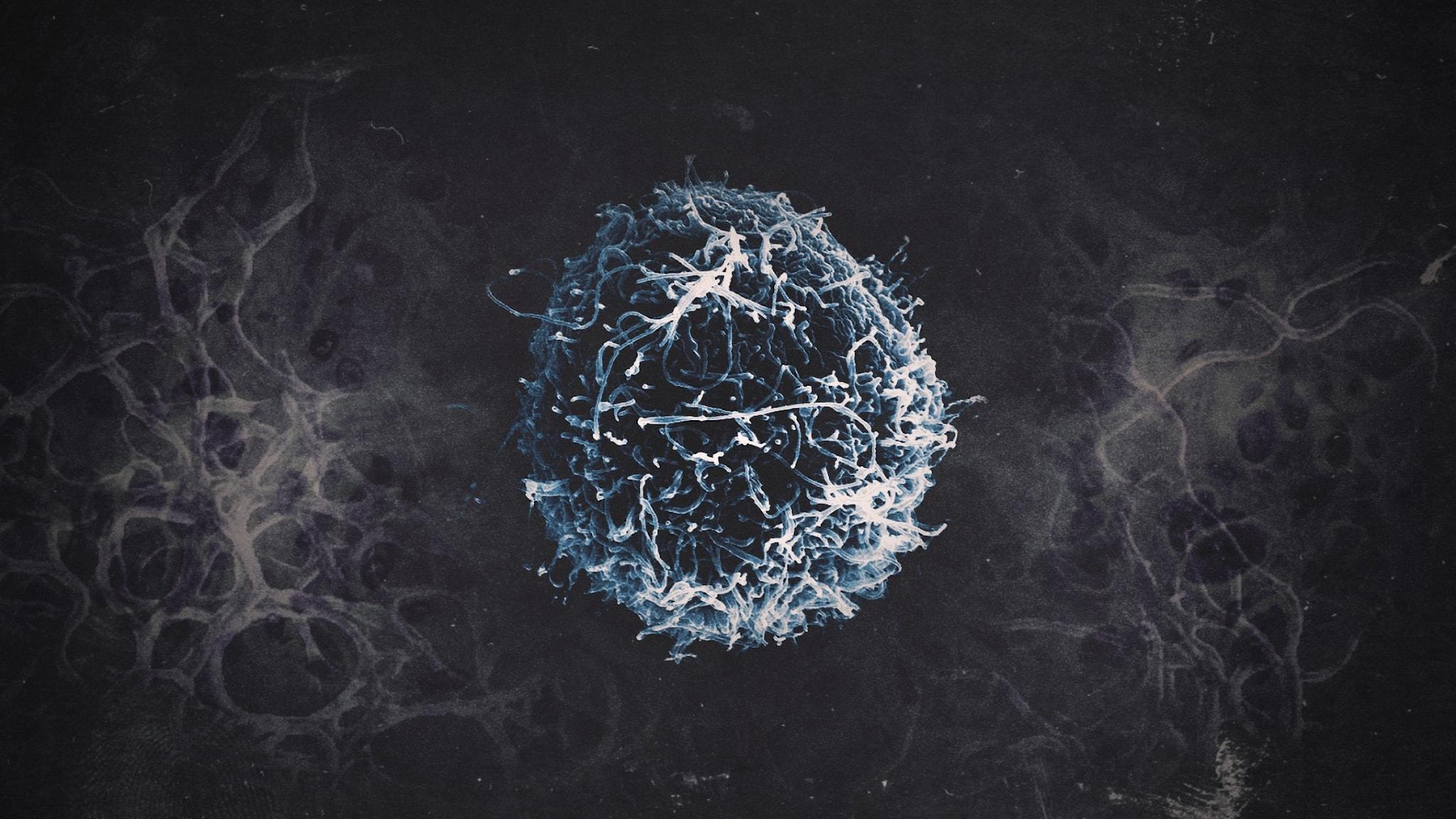 Ett virus