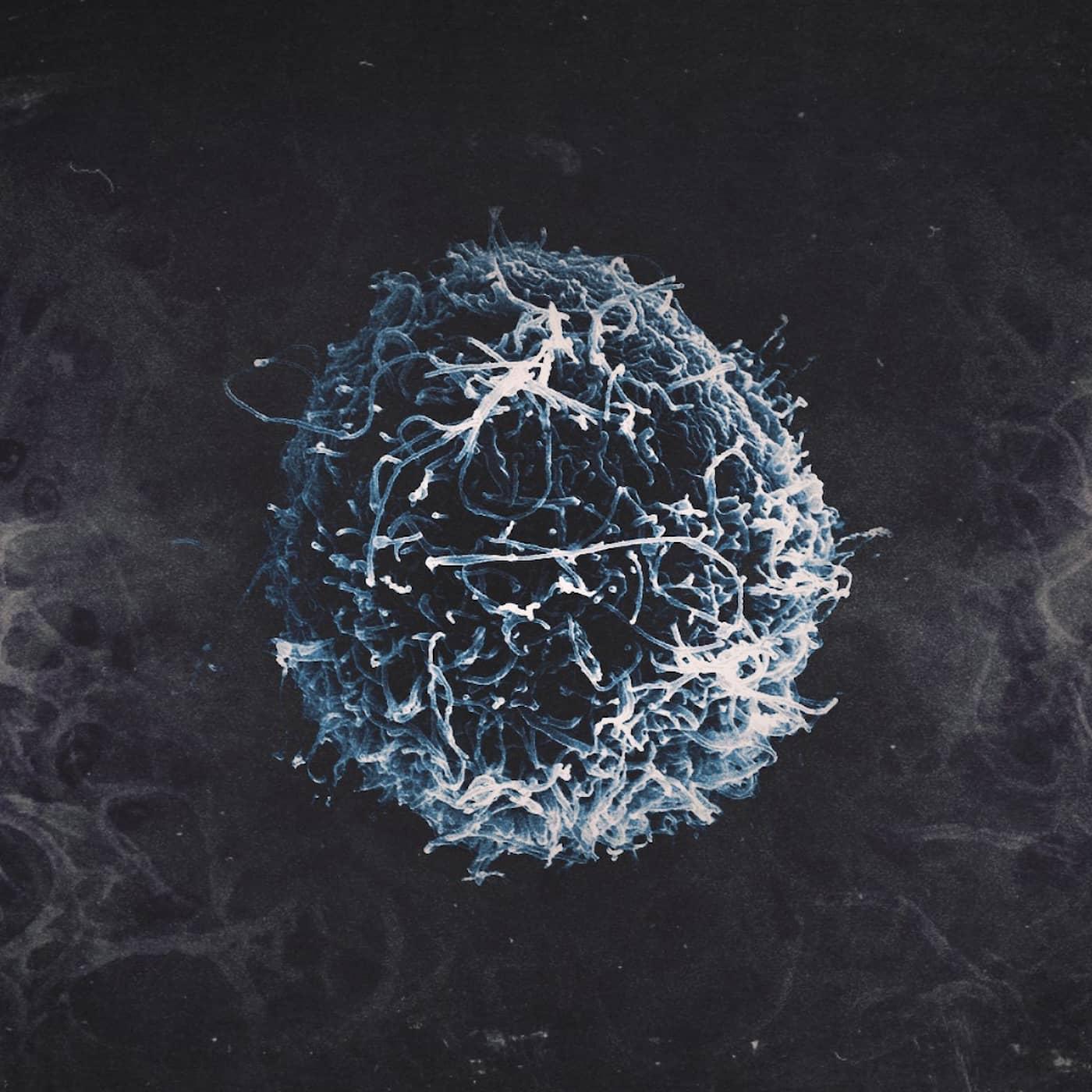 BONUSAVSNITT: Coronavirus 2019-nCoV