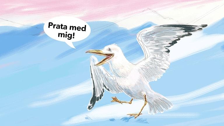 Måsen Gavia från Tonje i julkalendern säger prata med mig. Illustration av Katarina Strömgård.