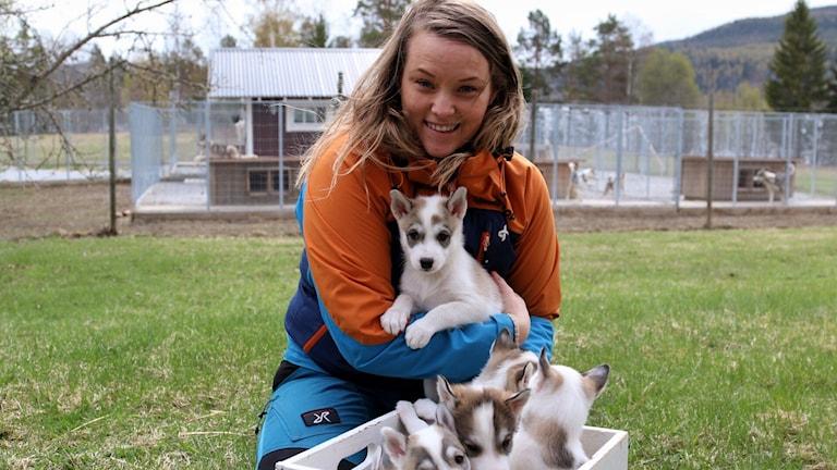 Malin Granqvist med sina Siberian huskey valpar.