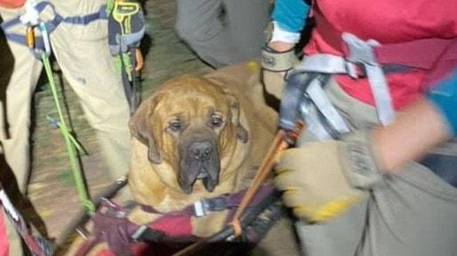 Hunden Floyd räddad på bergsvandring i USA