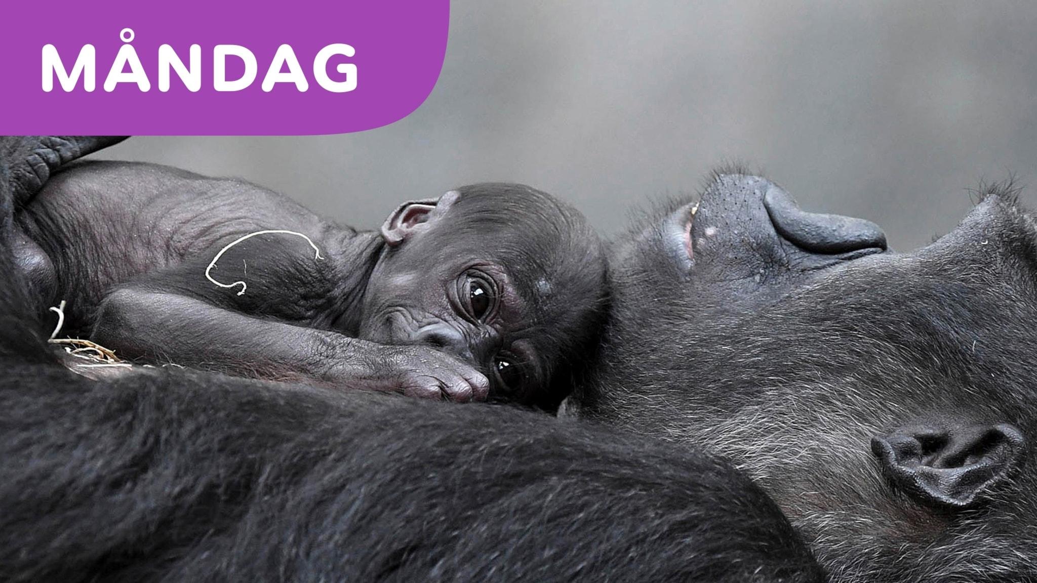 Över en miljon djurarter hotas av att dö ut i framtiden
