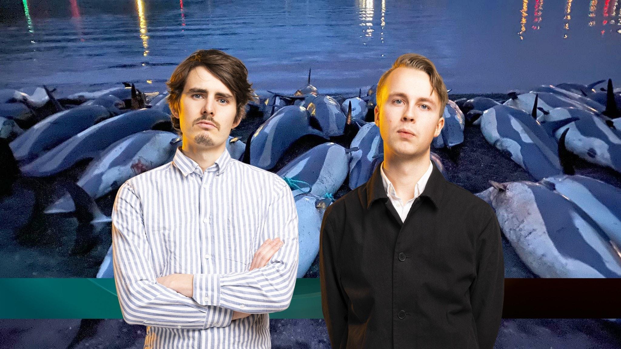 Juniornyheterna om dödade delfiner på Färöarna
