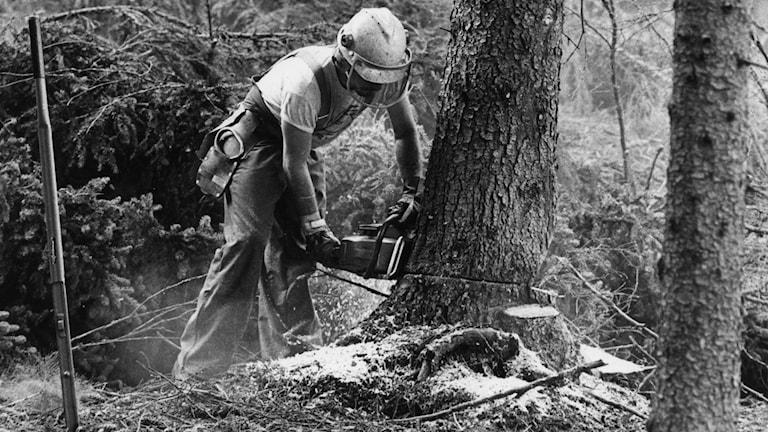 Metsuri työssään.