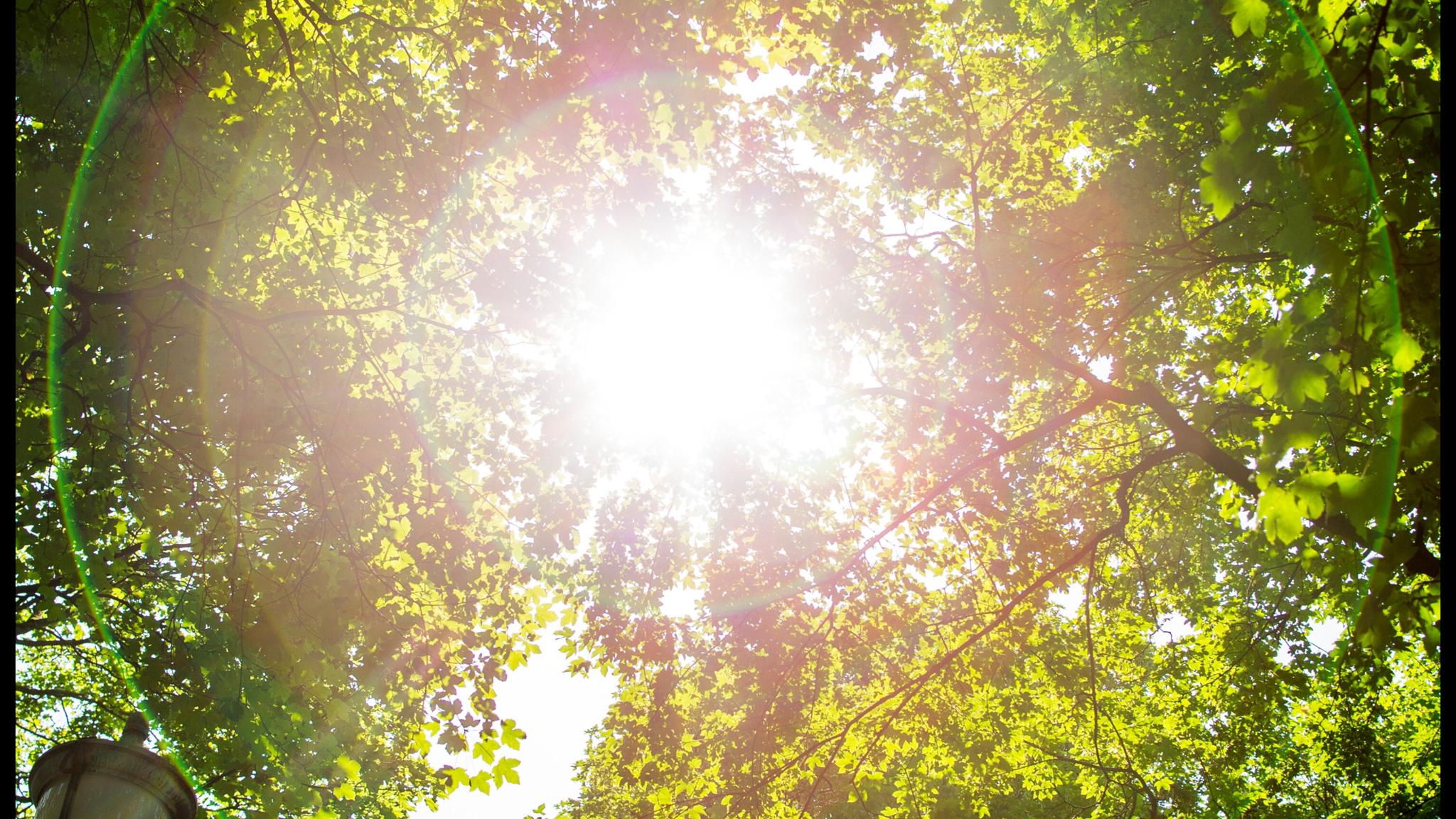 Sommarsol som silar genom ett träds lövverk.