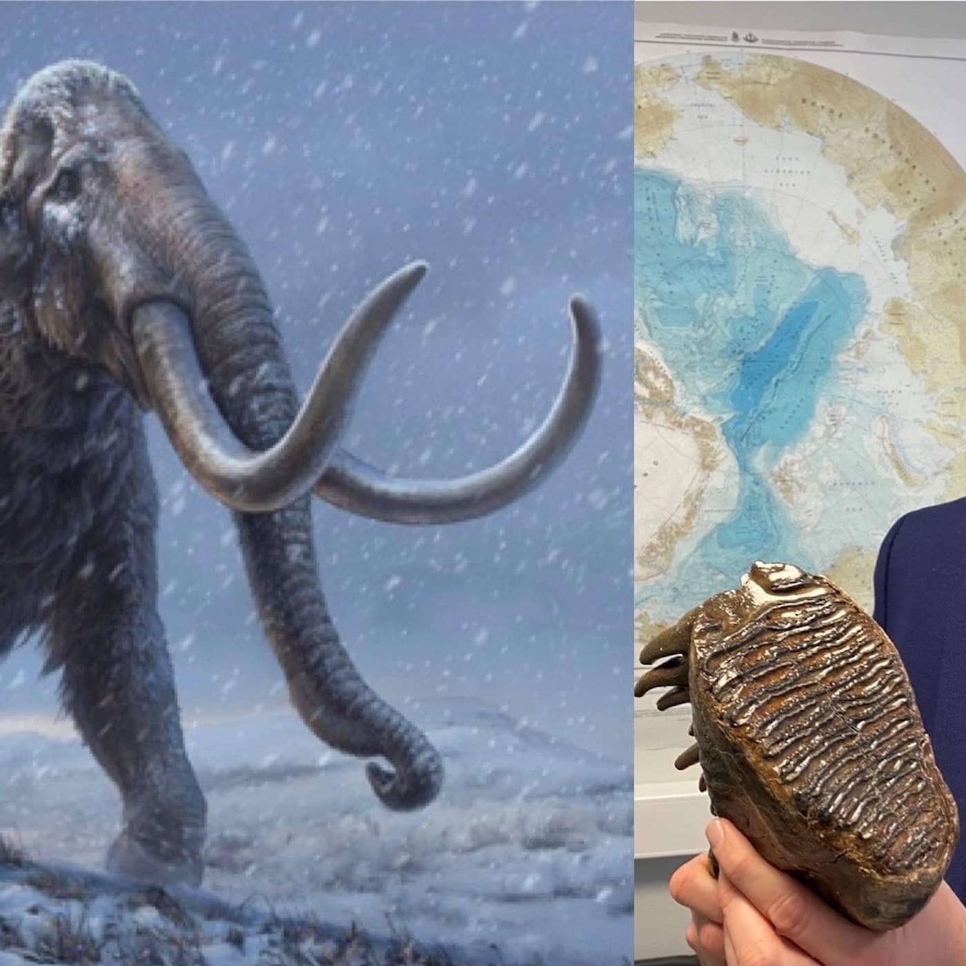 Så kan rekordgammalt mammut-dna hjälpa hotade djur idag