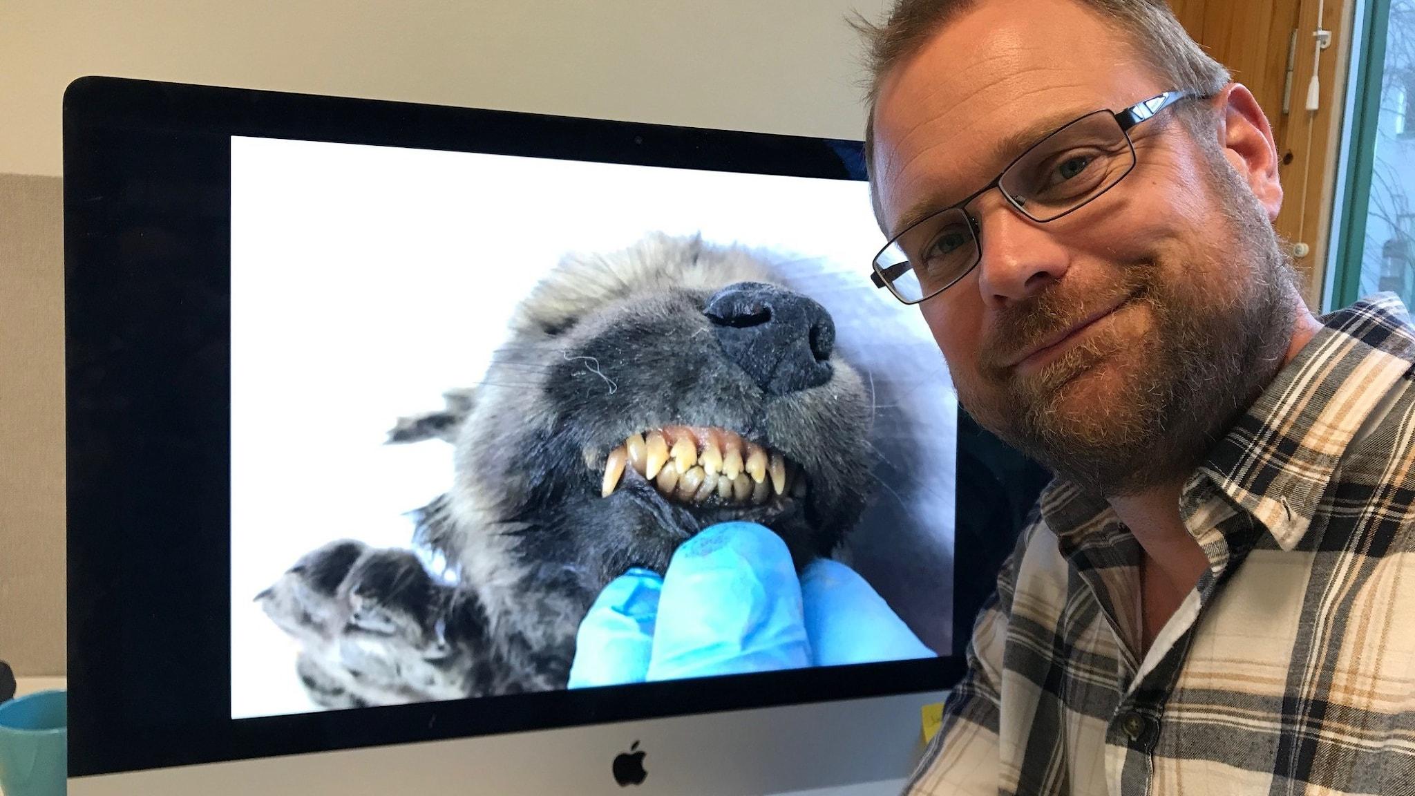 Love Dalén framför bildskärm där man ser bild av den luddiga valpen med grinet, intakta tänder och helt rosa tandkött.
