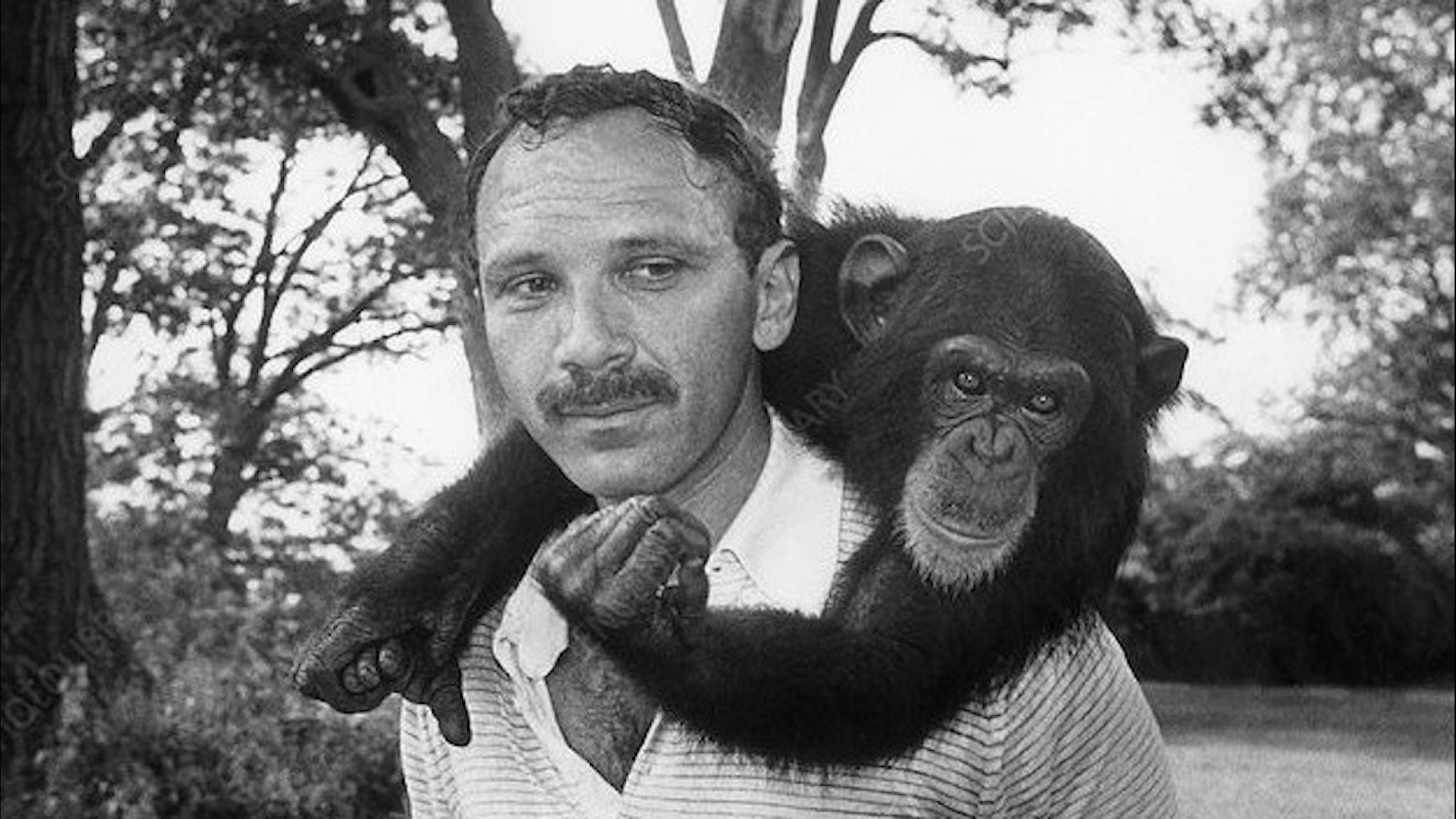 En ung Herb Terrace med schimpansen Nim som hänger runt halsen på honom.