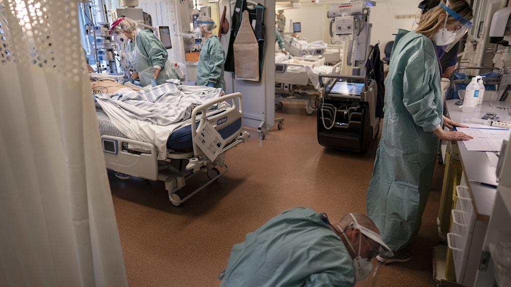 ኣብዛ ግዜ እዚኣ  ኣብ መላእ ሽወደን  ብሰንኪ ለበዳ ኮሮና ዝተዳኸሙ ከባቢ 392 ሰባት ኣብ ክፍሊ ጽዑቕ ሕክምናዊ ክንክን ዝወሃቦ (intensivvårdsavdelning (iva) ደቂሶም ሓገዝ ይግበረሎም ኣሎ።
