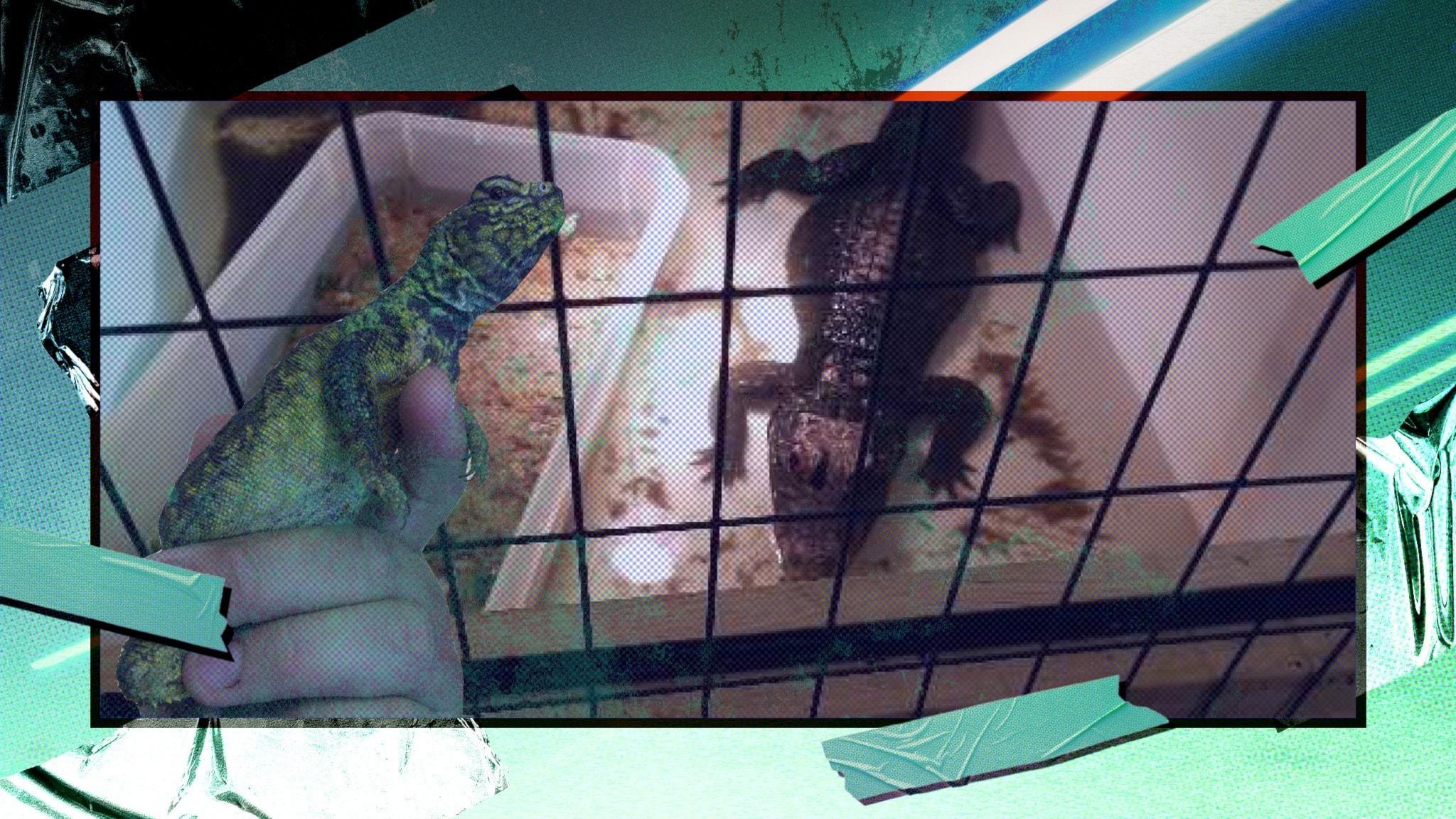 Reptiler i bur