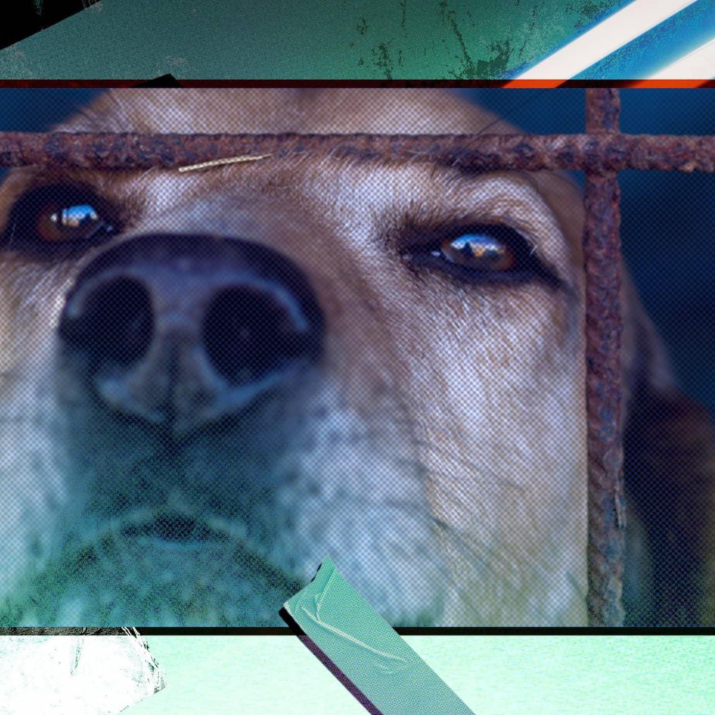 Smuggling av hundar ökar - avlivas ofta