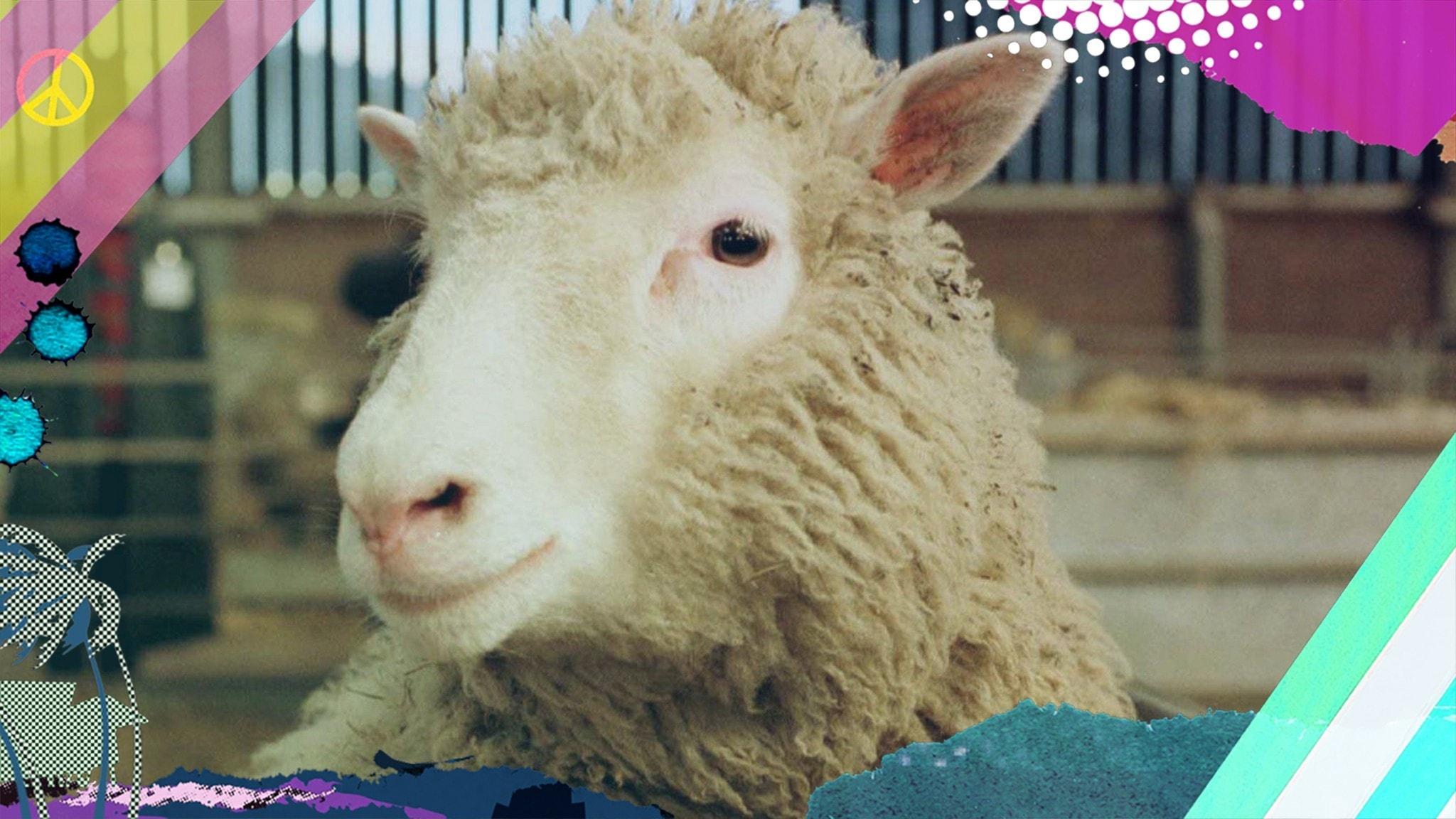 Stora händelser om Dolly - det klonade fåret