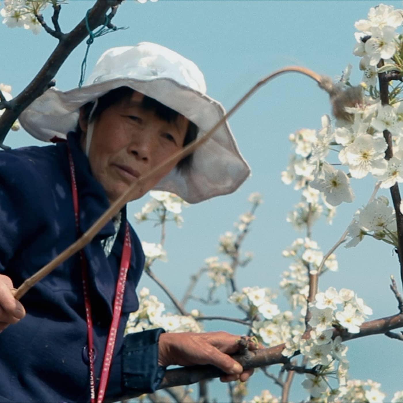 """""""Earth: Muted"""" – bland fruktträd och döda bin i Hanyuandalen i Kina"""