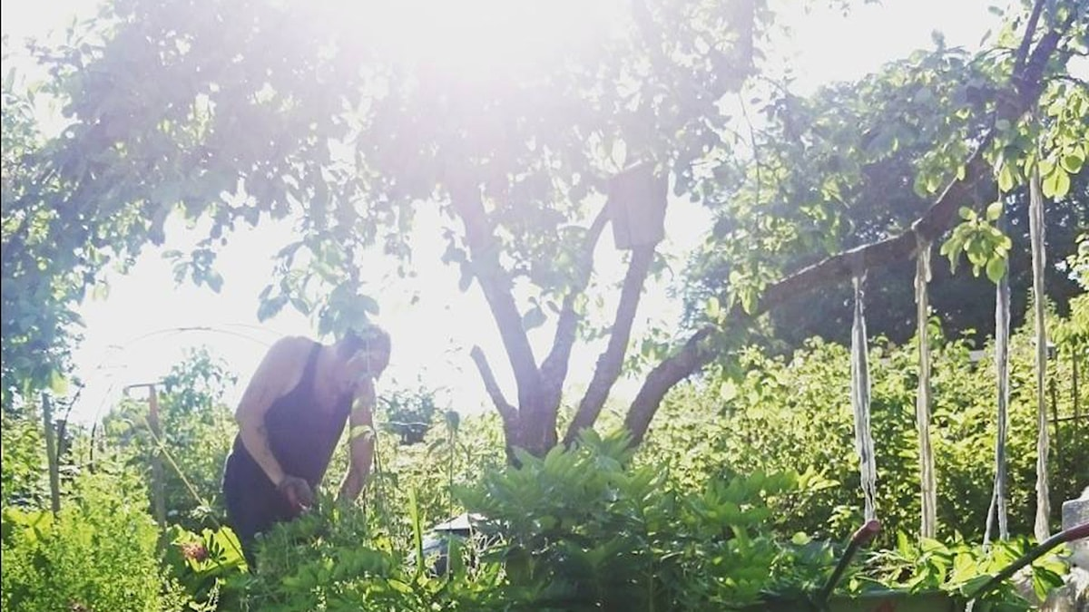 Vy från författaren Elin Unnes kolonilott. Foto: Elin Unnes