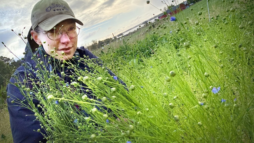 Kvinna i keps bakom grönt högväxt lin.