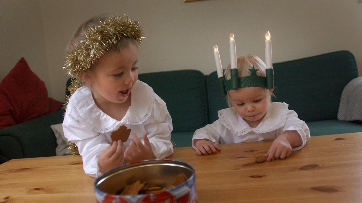 Två små flickor i förskoleåldern klädda som lucia och tärna äter ur en pepparkaksburk som står på ett bord