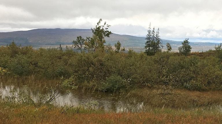 Fjällmiljö om hösten med myr, tjärn och buskar