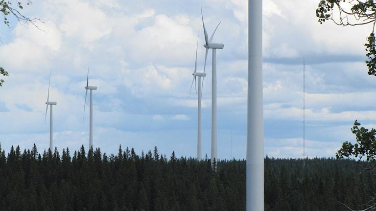 Vindkraftverk i vindkraftparken i Havsnäs. Foto: Shaho Aulla/SR