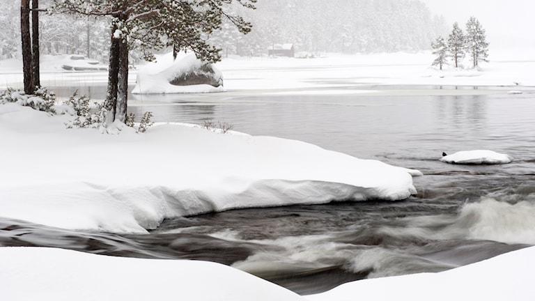 Vintervy över strömmande vattendrag mes liten strömstare