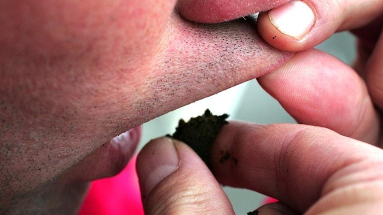 En man lägger in en prilla med snus under läppen.